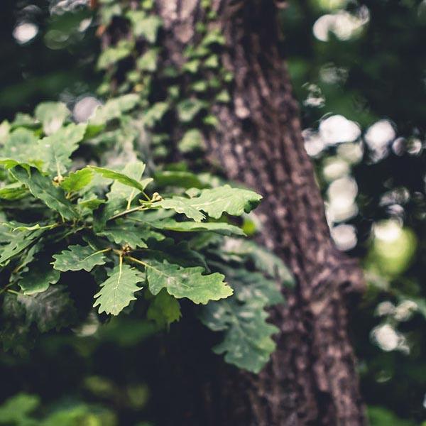 Parquet Bois écologique